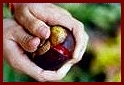 How to open Mangosteen fruit - #1